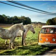 VW Combi chevaux 4