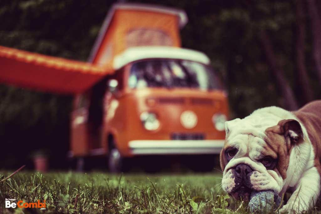 Helmut le Bulldog