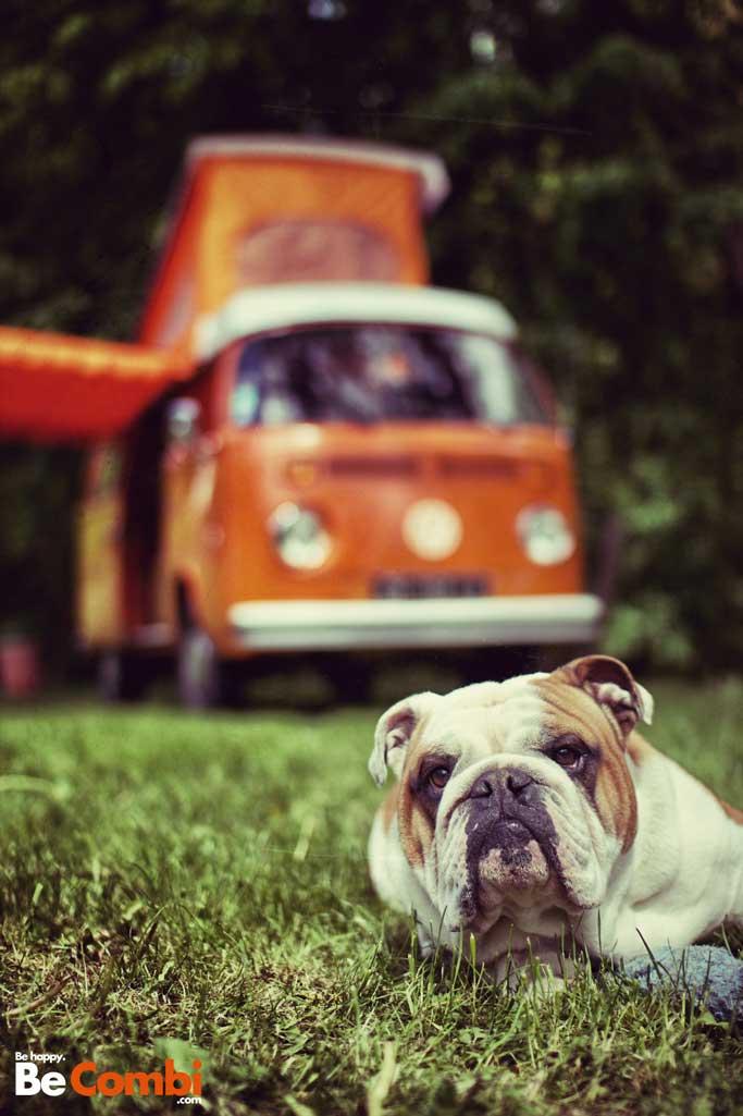 Helmut le Bulldog - BeCombi