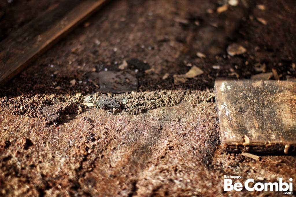 Elevage de fourmis et autres insectes de toutes sortes dans le plancher pourri.