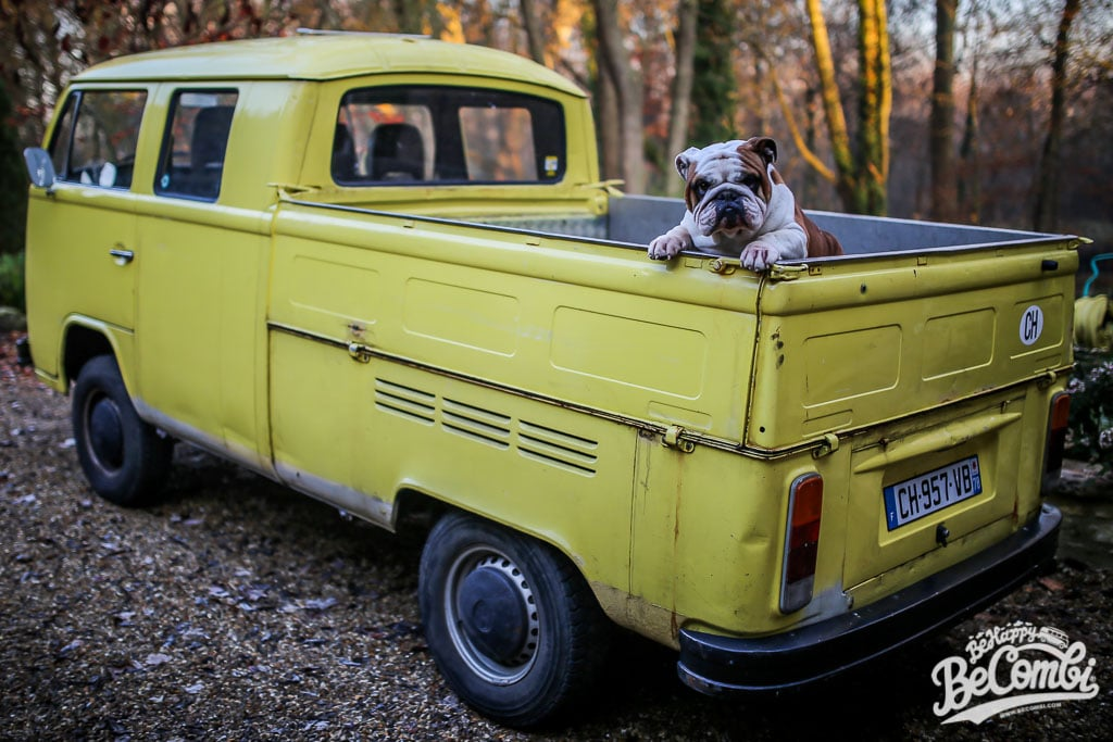 Un Bulldog en VW Bulli | Be Combi