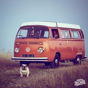 vwcamper vw volkswagen bulli bulldog englishbulldog t2b latebay westfalia vanlifehellip
