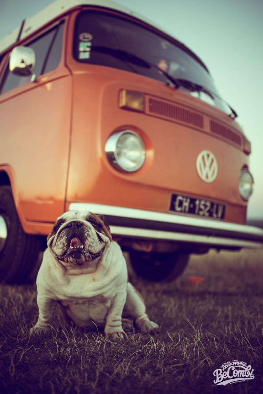 Séance photo en Combi avec Helmut le Bulldog   BeCombi
