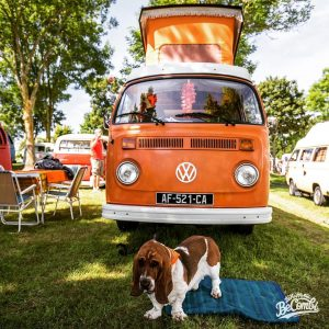 becombi vanlife dog vwtype2 baywindow